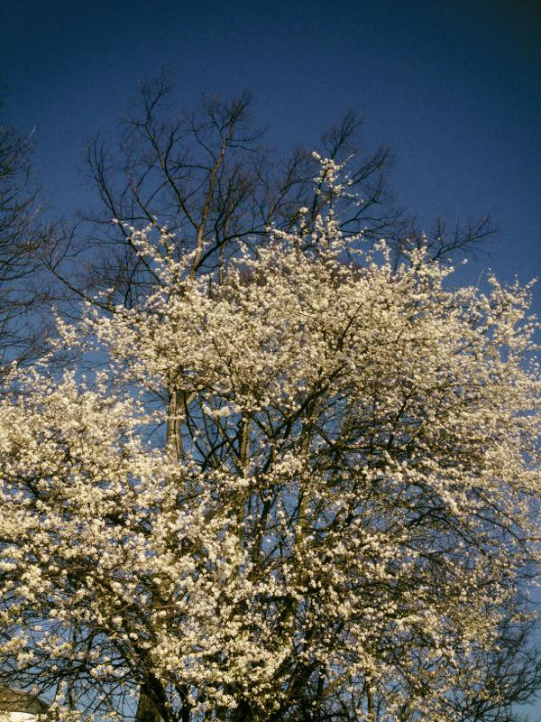 170314_bloom